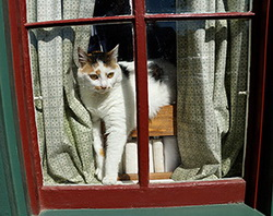 Domino in the window.