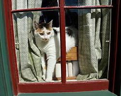 domino-in-the-window-250.jpg